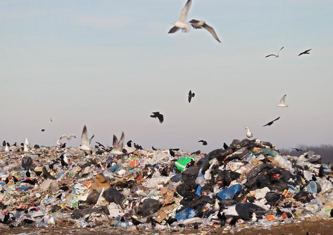 полигон, мусор