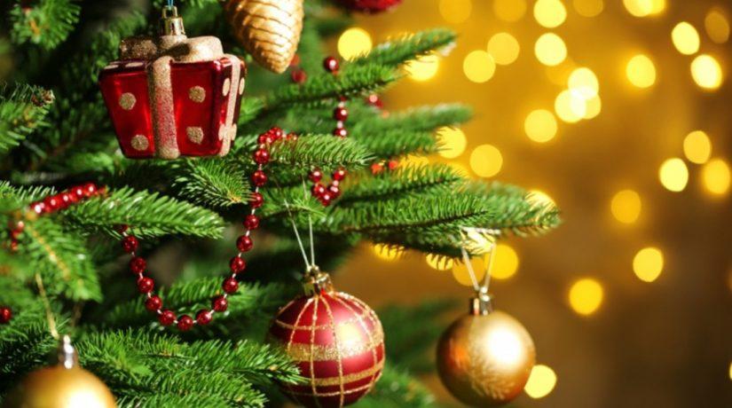 Куда сдать елку после праздников: адреса и время работы пунктов приема