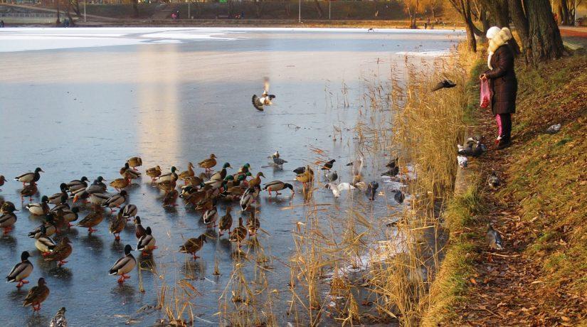 замерзший пруд, зима