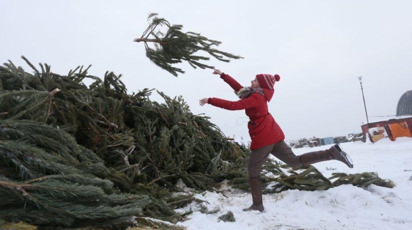 Цифра дня. Сколько елок утилизировали киевляне