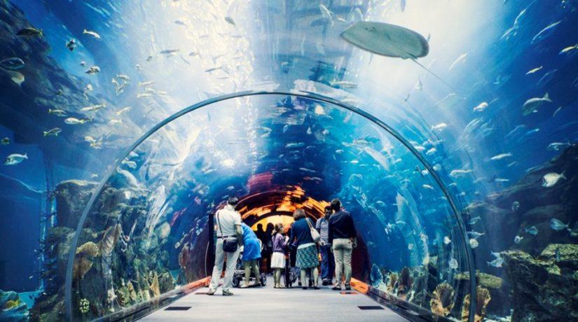 В Киевском зоопарке появится подземный океанариум
