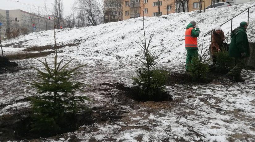 В сквере Волонтеров киевляне высадили свои новогодние елки