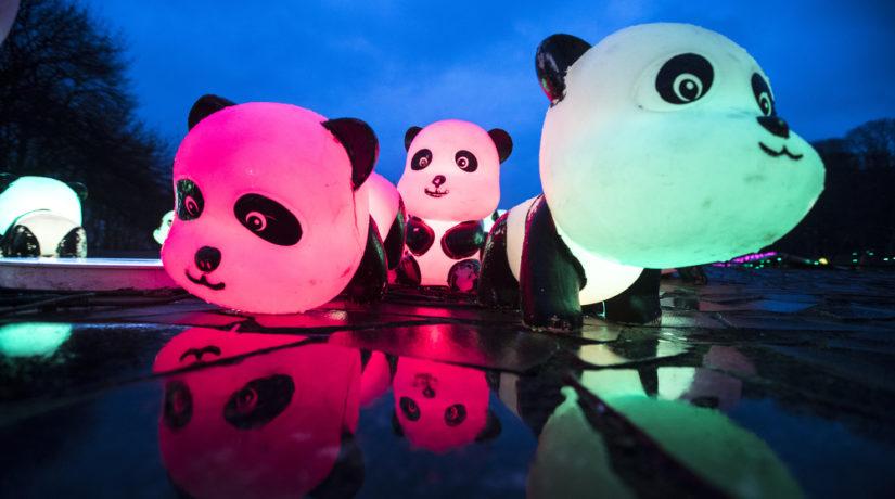 Кто хочет продолжения праздников: Китайский Новый год на Певческом поле – видео инсталляций