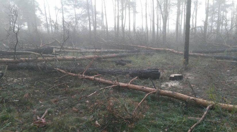 Деревья возле «Лесной» рубят не в парке, а рядом – разъяснение коммунальщиков