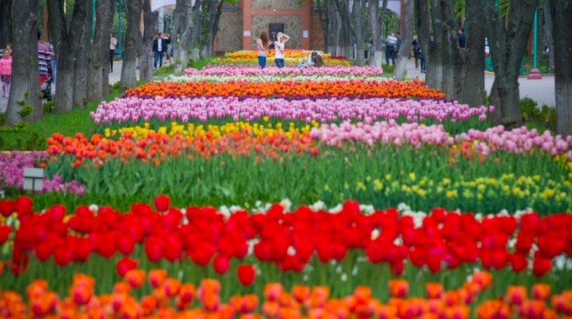 Поля цветов, озера, кемпинги, аттракционы – под Киевом создают уникальный дендропарк