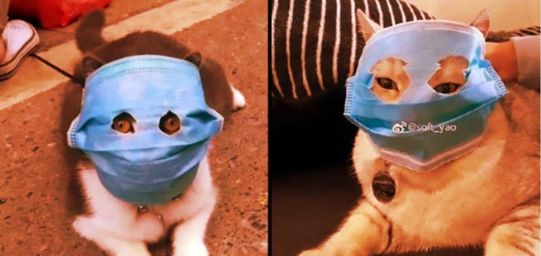 коты в масках
