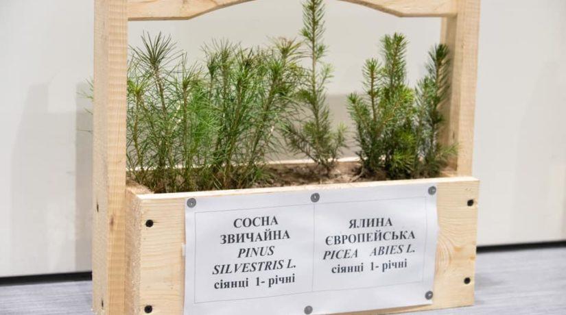 Где в Киеве нужно и можно сажать деревья – интерактивная карта