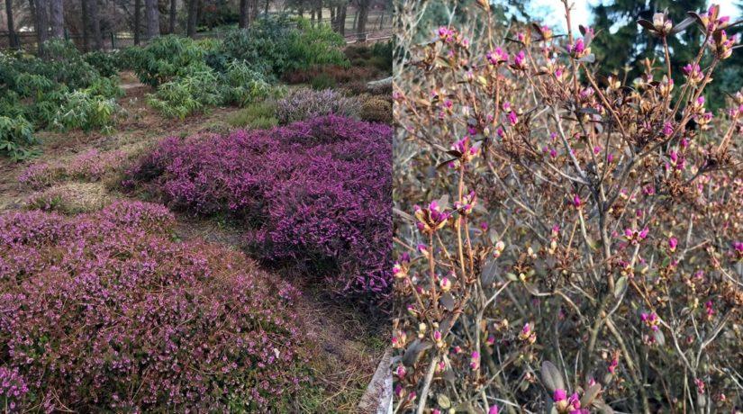 Все в сад! Что цветет на открытой территории в ботсаду Гришко