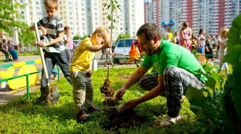 Изменим климат вместе. В Киеве будут высаживать миллион деревьев