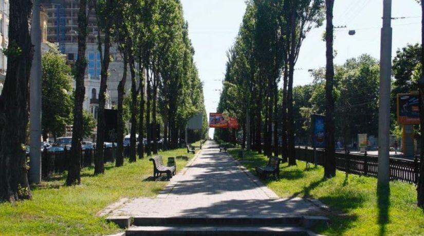 На бульваре Шевченко появился символический тополь
