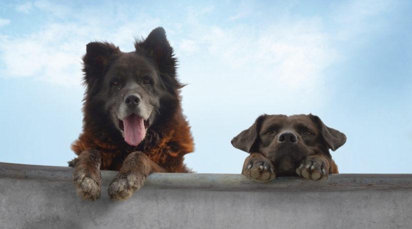 Любителям хвостиков и мокрых носиков: в Киеве пройдет фестиваль кино о животных