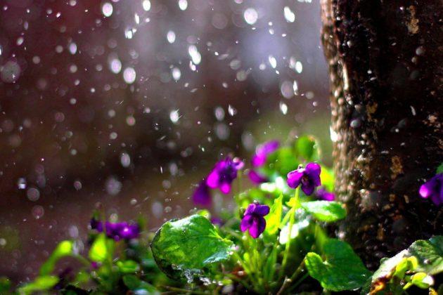 Погода на вихідних: чекаємо дощу і не піддаємось спокусі