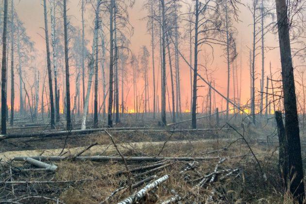 Кличко пояснює: у Чорнобилі лише тліє, горить – на Житомирщині