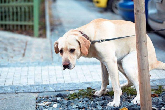 Кияни хочуть штрафами змусити власників собак прибирати за ними на вулиці