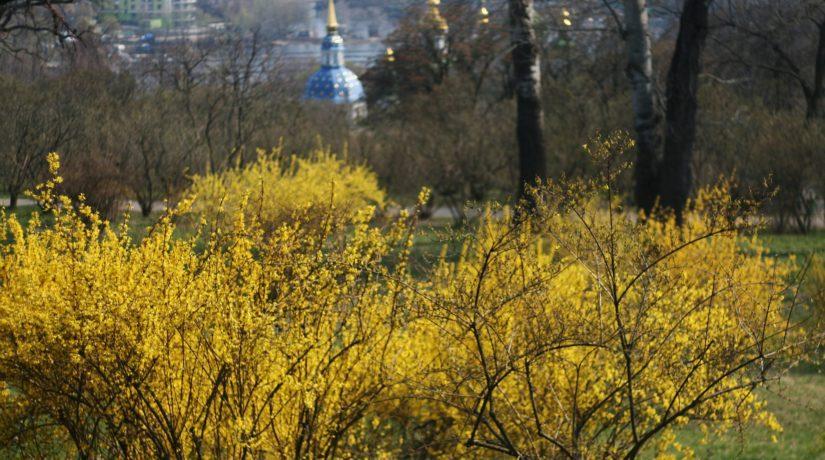 """Магнолии и """"Золотая долина"""" – полюбуйтесь красотой в ботсаду им. Гришко"""