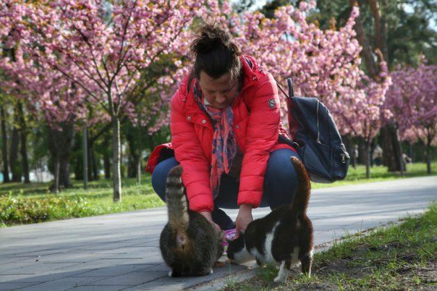 Як цвітуть сакури. Парк Кіото сьогодні – фото