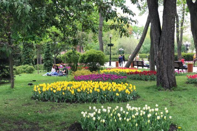 Карантин, день 54. Поки поліція ганяла любителів тюльпанів, бізнес почав протести