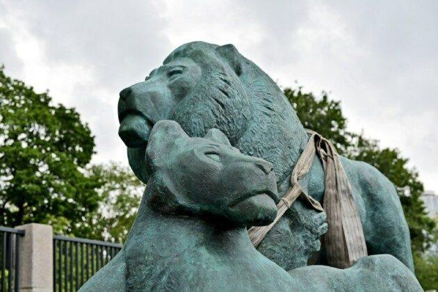 Легенда повернулась: бронзові леви оселились у Київському зоопарку