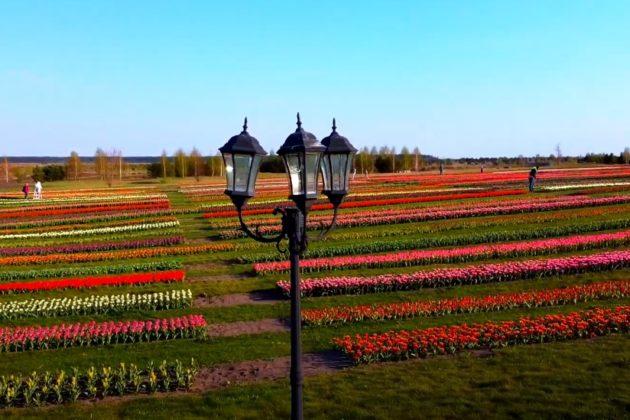"""Мільйони тюльпанів """"Добропарку"""" показали з висоти пташиного польоту"""