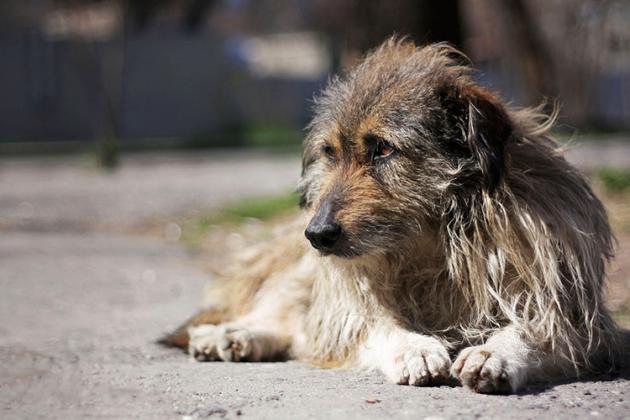 У Дарницькому районі виявили 10 мертвих собак. Підозрюють отруєння