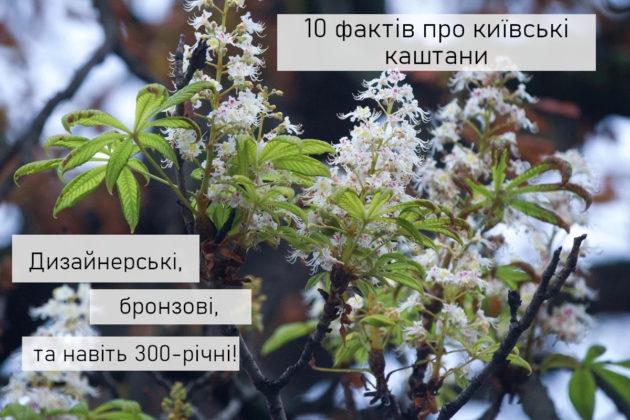 10 фактів про каштани Києва. Є дизайнерські, бронзові та навіть 300-літні