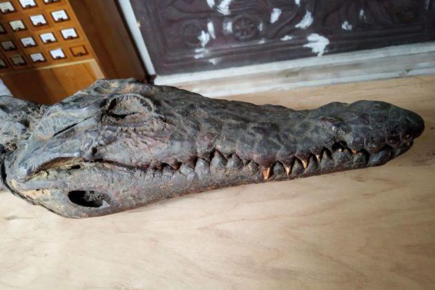 Єгипетський крокодил в Лаврі – звідки взявся и що відомо про артефакт