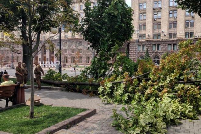 Чому дерева в Києві падають на людей