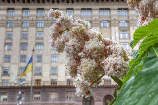 Офіційно! Які питання розгляне Київрада на першому онлайн-засіданні