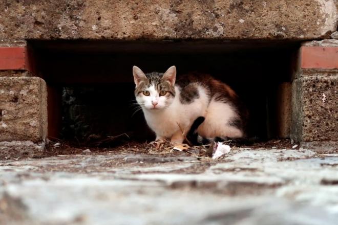 Безкоштовно стерилізувати кота в Києві можна буде упродовж 10 днів липня