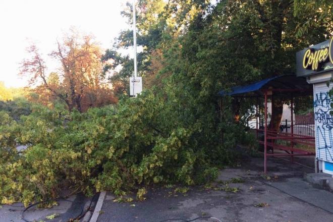 Негода в Києві залишила десяток повалених дерев (ФОТО)