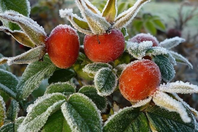 Прохолодні дні і ночі ще й заморозки – що приготувала погода на вихідні
