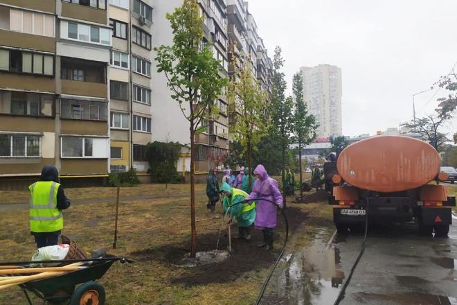 На Дарниці висадили липову алею. П'янкий аромат дерева подарують вже наступного літа