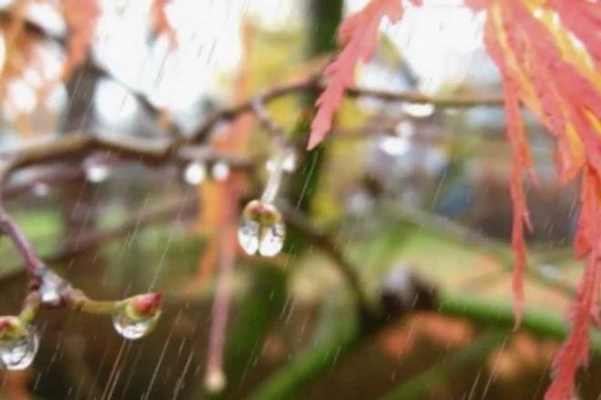 Дощі, вітер і холод – що приготувала погода на вихідні