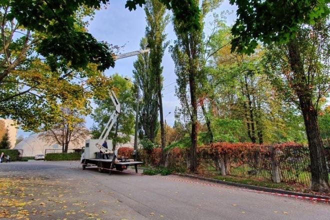 Киянам нагадали, що в Києві заборонено обрізати дерева
