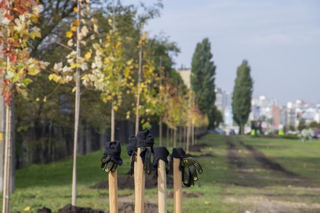 """""""Озеленення планети"""": Україна встановила світовий рекорд за кількістю висаджених дерев"""