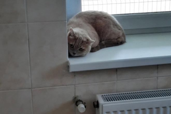 Безпритульних хвостиків поменшає: у Борисполі запрацював Центр стерилізації та адопції тварин