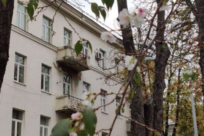 Сакури зацвіли в центрі Києва (ФОТО)