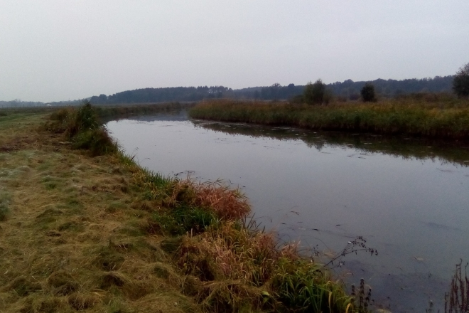 У Вишгородському районі біля річки Здвиж висадять 600 дерев – долучитися може кожен