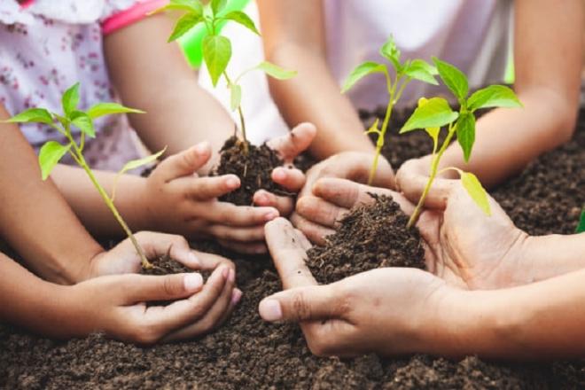 1 000 000 дерев за добу. В Україні пройде масштабна акція озеленення