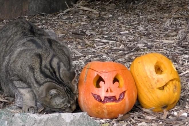 Зоо-Хелловін: київський зоопарк запрошує на гарбузовийтиждень – графік