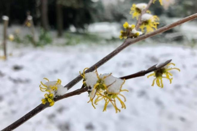 Витончені пелюстки і аромат лимону. У ботсаду зацвіли незвичні рослини
