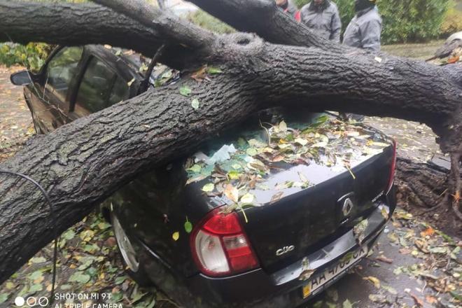 На Гавела дерево впало на припаркований автомобіль (ФОТО)