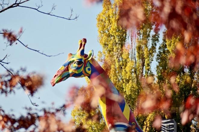 Київський зоопарк почав працювати в режимі парку