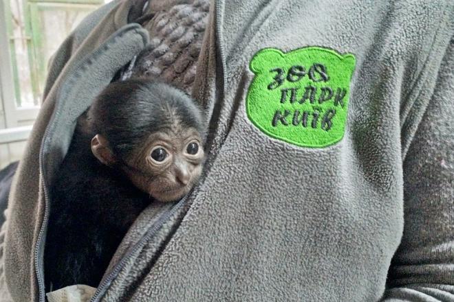 У столичному зоопарку бебібум: на світ з'явився рідкісний сіаманг та ще біля сотні малят