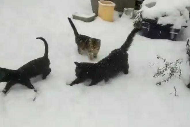 Перший сніг для хвостатих з Котомістечка (ВІДЕО)