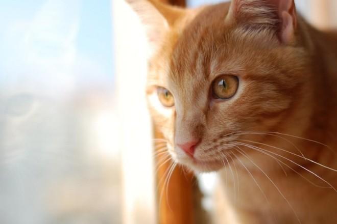 На Солом'янці виявили другий за три місяці випадок сказу у тварини – на деяких вулицях ввели карантин