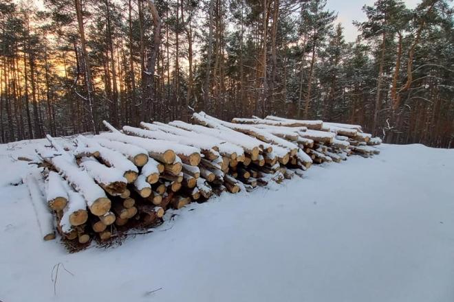 Помітили вирубку лісу чи забруднення річки? Повідомити про порушення можна миттєво зі смартфону