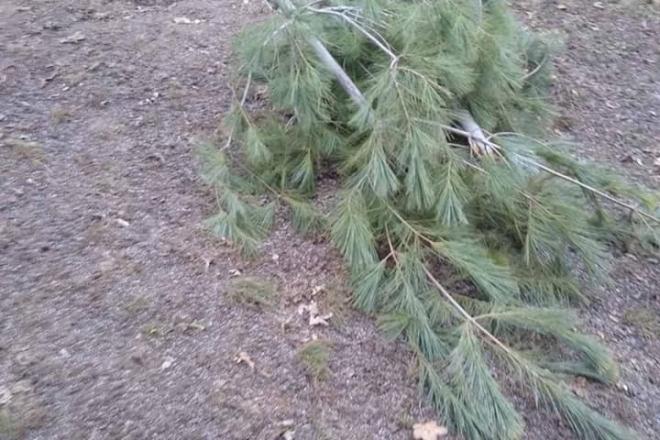 """В одному зі скверів """"вишукано"""" понівечили дерева. Такого давно не бачили"""
