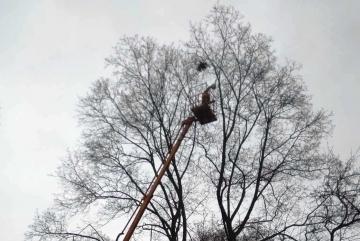 """Мораторій більше не діє: у сквері Святошинського району обрізають """"багаж"""" з дерев (ФОТО)"""