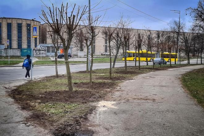 Лівий берег Києва буде з кленовою алеєю. Висаджували три тижні
